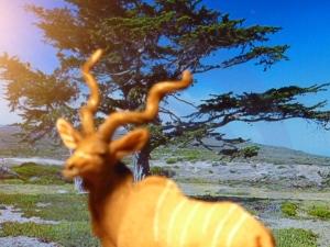 the walking antelope