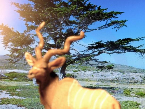 The great Kudu walks!